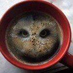 a café hibou